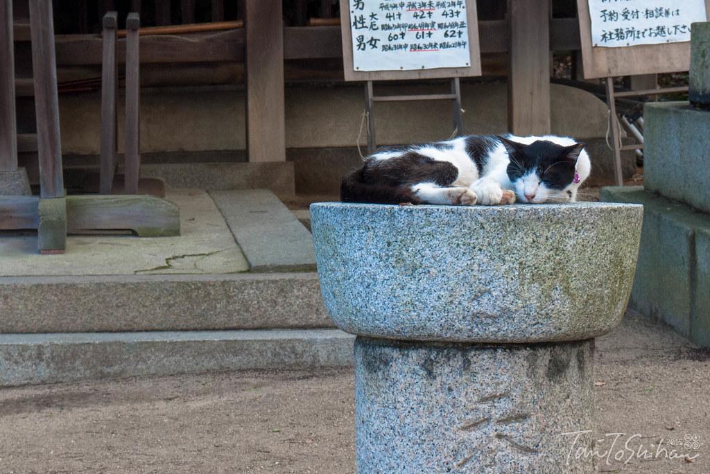尾道 (Onomichi)
