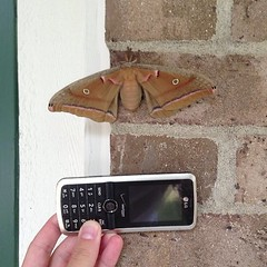 Mothzilla has taken up residence on our front door. So basically I'm never leaving the house again.