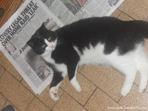 Wed, Aug 7th, 2013 Lost Male Cat - Parke, Cloonfad  -  Ballyhaunis, Roscommon