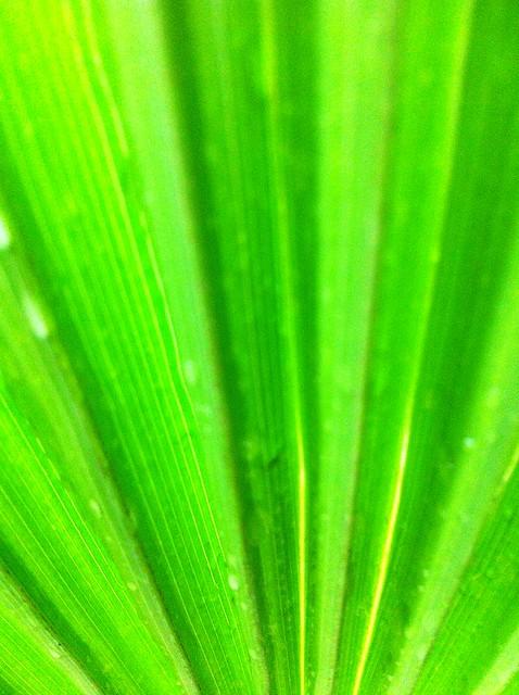 Blurr Palm