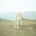 white horse by Masato.