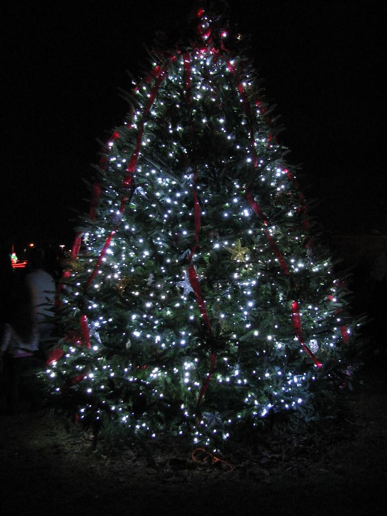 Tree Lighting Ceremony | City of Palm Coast, Florida