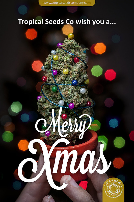 Merry Xmas ! + 6% OFF - Tropical Seeds Company Seed Bank Blog