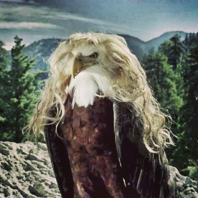 As you know, ntandy wants to soar like a Bald Eagle with a full head of hair... #ntandy #dreamweaving #boundforglory #respect