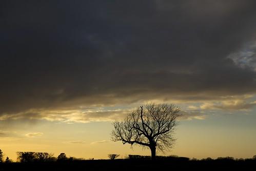 sunset sky tree sunshine rain clouds shower day shine cielo sole albero rainorshine