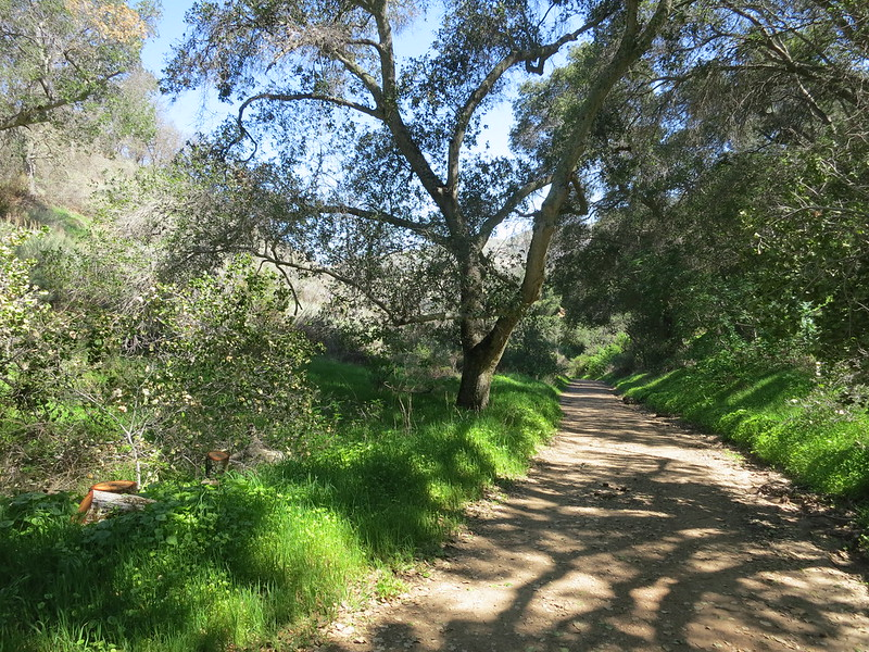 Shady trees and lush greenery along the Ohlone Trail in Del Valle Regional Park near Lichen Bark Picnic Area.