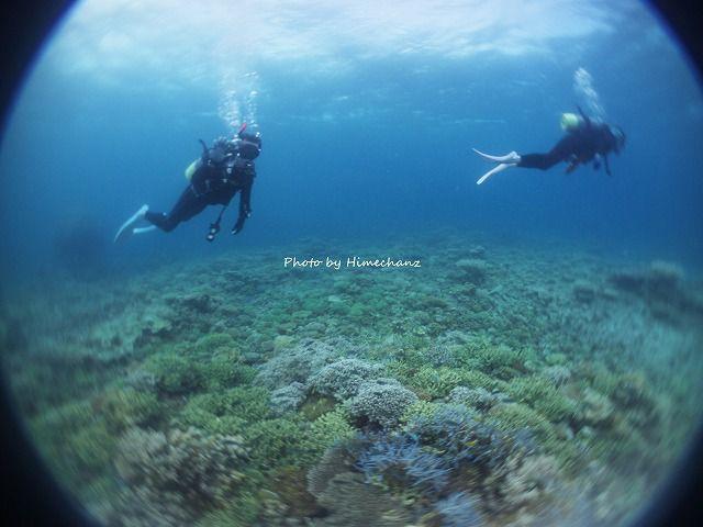 サンゴの上をお散歩です