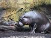 Melbourne Zoo 0715 P7249231a by sophbax22