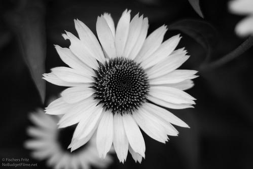 Flower-III.jpg