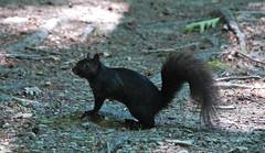 tasmanian devil(0.0), mink(0.0), animal(1.0), squirrel(1.0), rodent(1.0), fauna(1.0), wildlife(1.0),