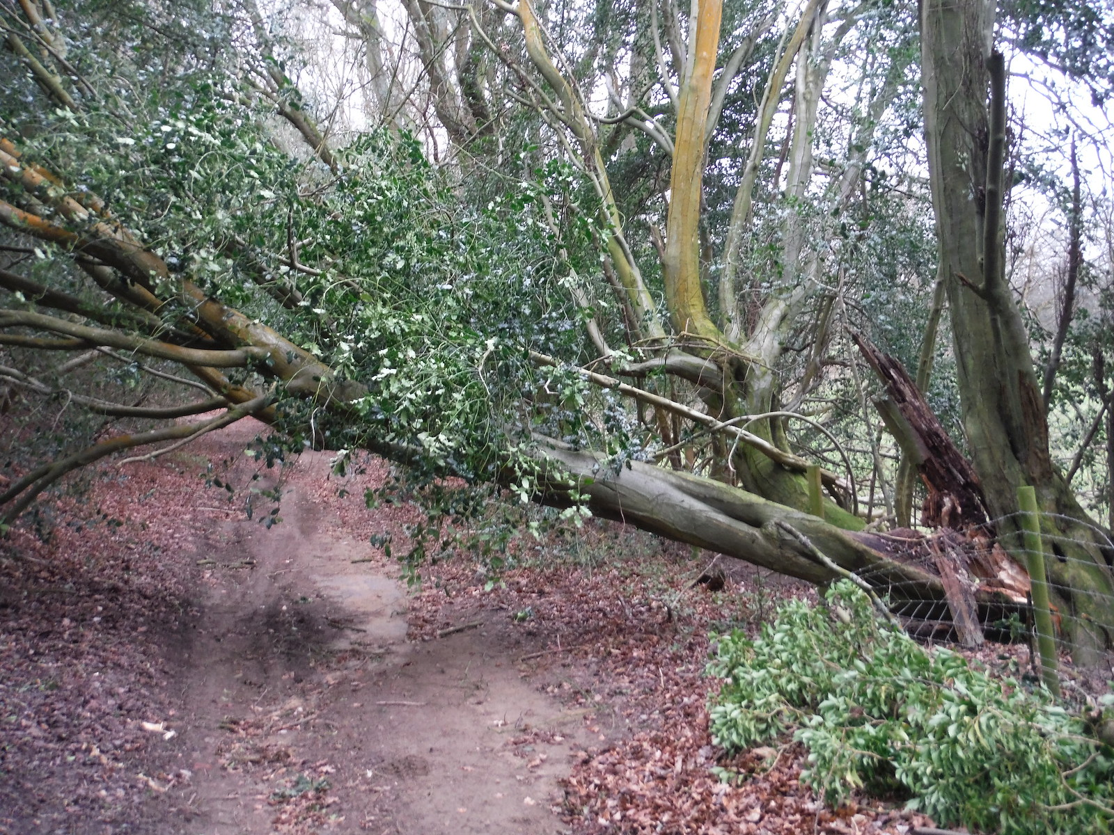 Storm 'Doris' has gone through SWC Walk 144 Haslemere to Farnham