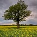 Alone in a field... except for a tree by alexbaxterca