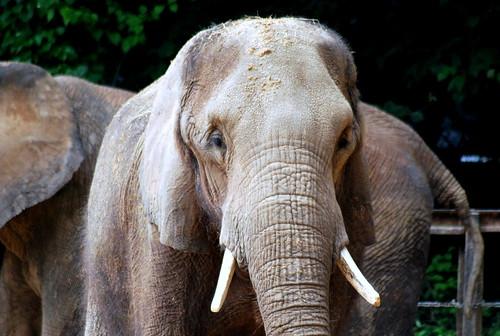 MZ - elephant-001