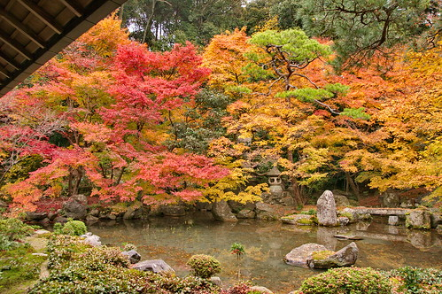 【写真】紅葉 : 蓮華寺