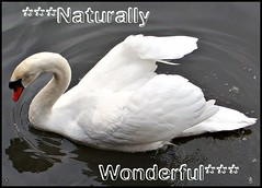 ***Naturally Wonderful***