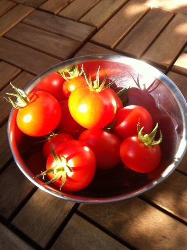 Schöneberger Tomaten - Frisch von meinem Balkon