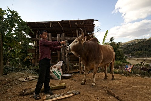 animals laos indochinatrip sonyalphaa850 zeissvariosonnar1635mmf28za