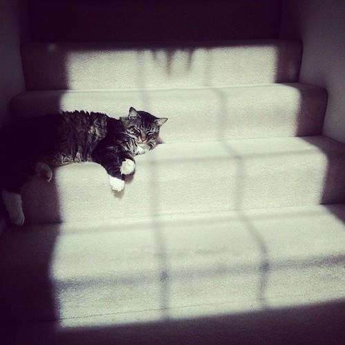 A spot of sun #acatslife