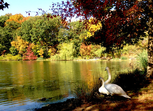 newyorkcity autumn fall queens bayside sawns oaklandlake oaklandpond