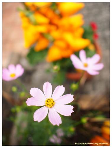 Flowers # 04