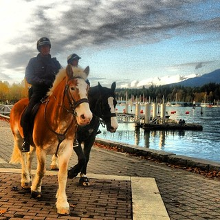 #van4life #vancouver #stanleypark #mountedpolice