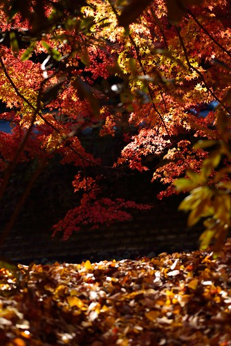 Autumnal leaves of Muro-ji temple No.3.