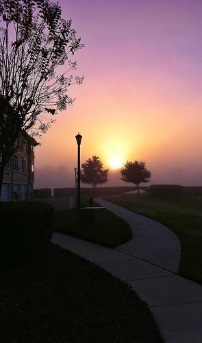 trees sunrise morningmist