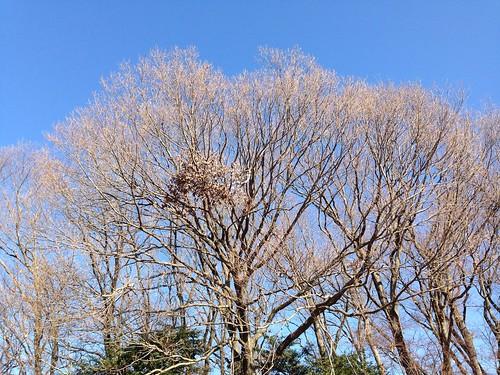 折れた枝の葉は朽ちていく