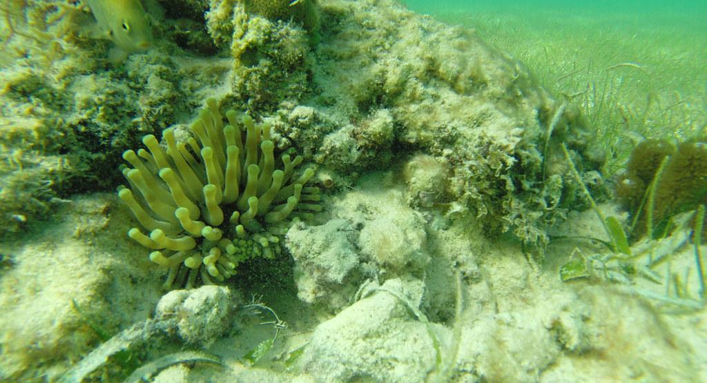 Yucatan trip photos from snorkling 11976005144_d3fffa7074_b