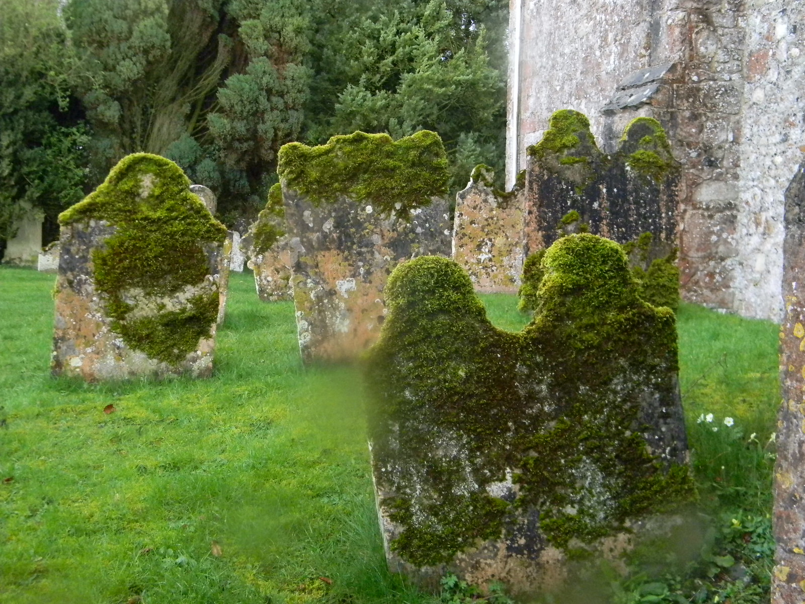 Mossy headstones Lenham to Hollingbourne