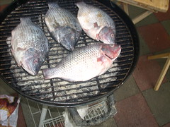 milkfish(0.0), tilapia(1.0), animal(1.0), carp(1.0), fish(1.0), fish(1.0), common rudd(1.0), tilapia(1.0),