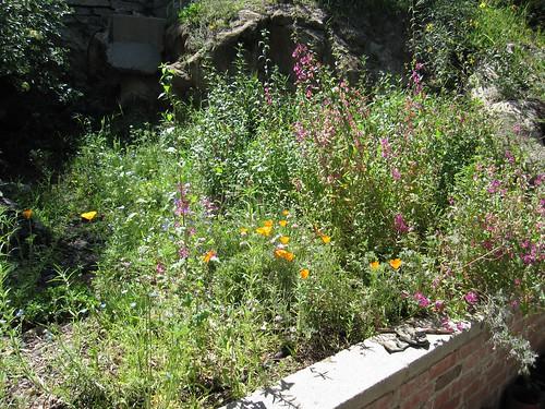 Former driveway, now garden