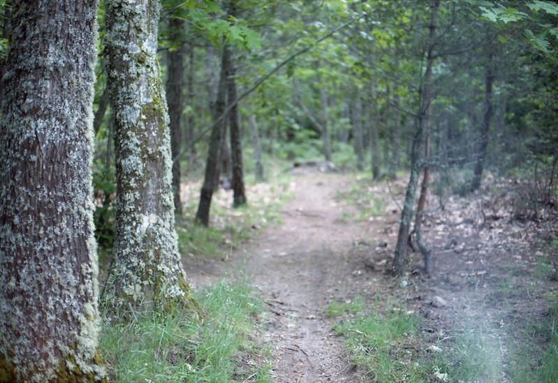 o caminho que o Capuchinho Vermelho escolheu