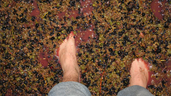 Aspecto del orujo de vino. Autor, Directo al paladar