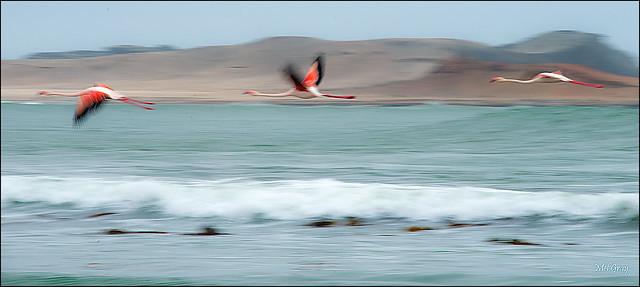 Flamingo-bypass_DSC1134
