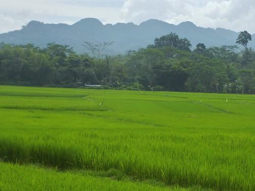 Sulawesi13-Makale-Rantepoao (40)