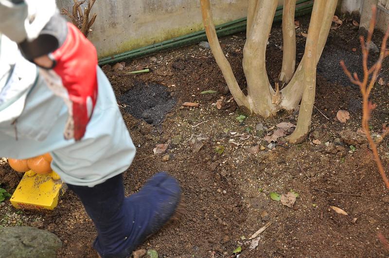 庭木に肥料をやる手順3,土をかぶせる