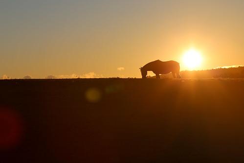 horse newyork sundown farm upstate lensflare stables intothesun washingtoncounty chestnutridge