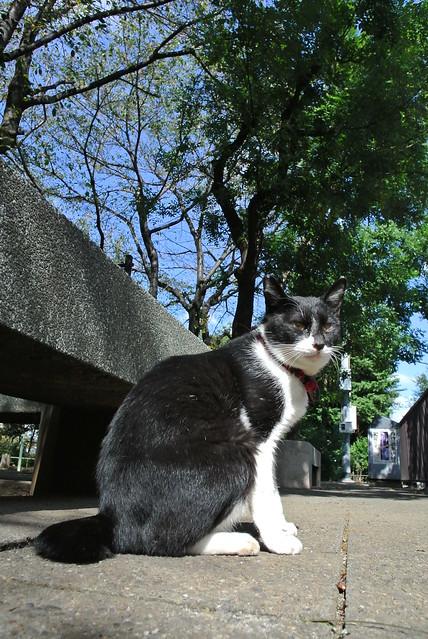 東京路地裏散歩 駒込のネコ 2013年10月18日