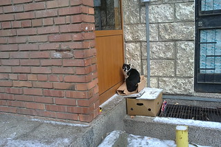 Krasnodar Cat