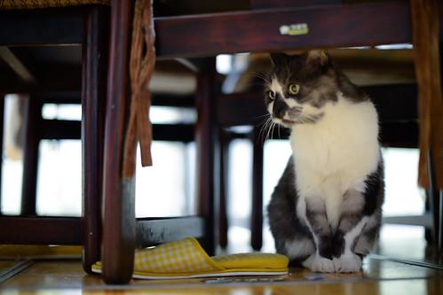 Miyako hiding under a table