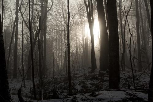 mist fog haze woods