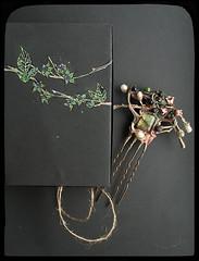 Fevered poison: Atropa belladonna