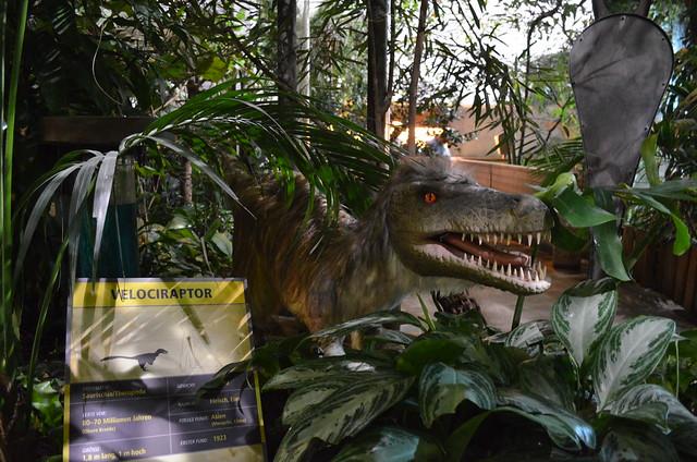 Biosphaere Potsdam Velociraptor