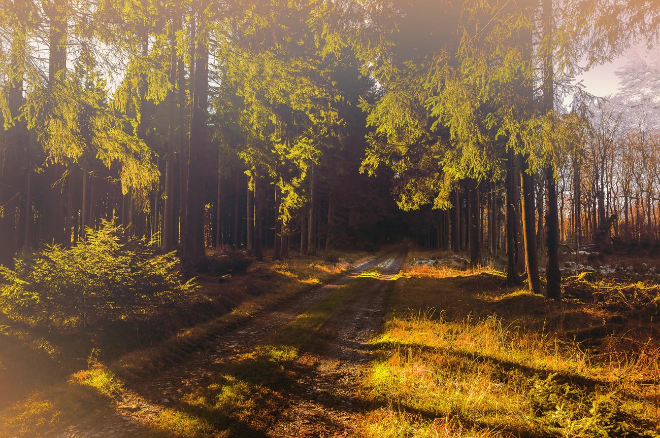 лес-освещенный-солнцем