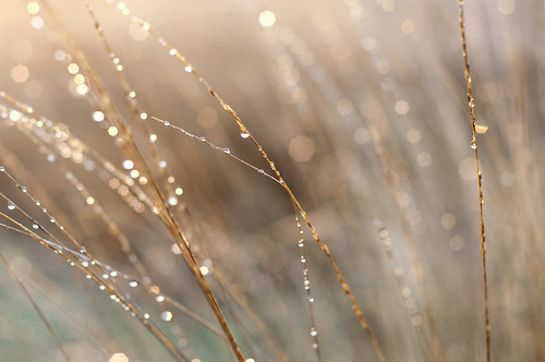 Dewdrops at Sunrise