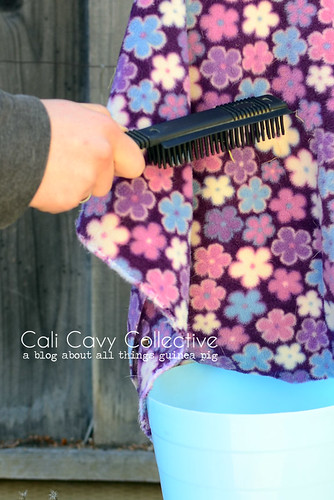 Cleaning tip: use a curry comb to remove hay and hair from fleece