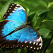 Blue by Ana MD