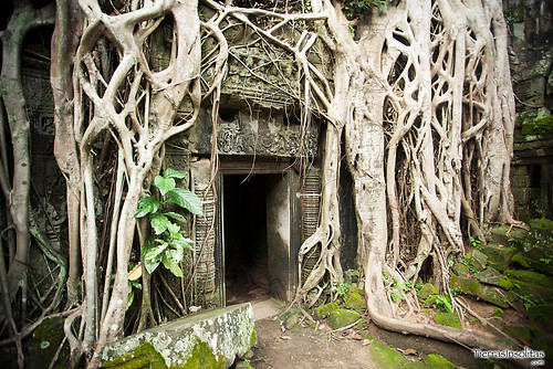 Templo de Ta Prohm (Angkor, Camboya)