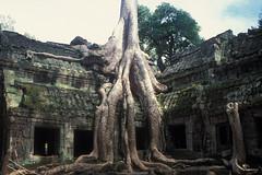 Ta Prohm - Octopus Tree